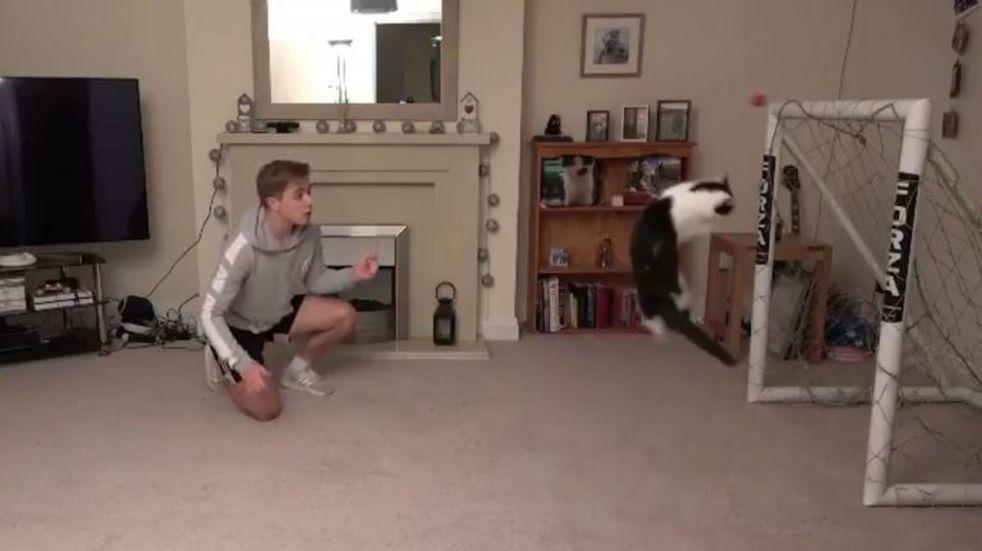 Un gato que ataja penales se volvió viral en las redes sociales