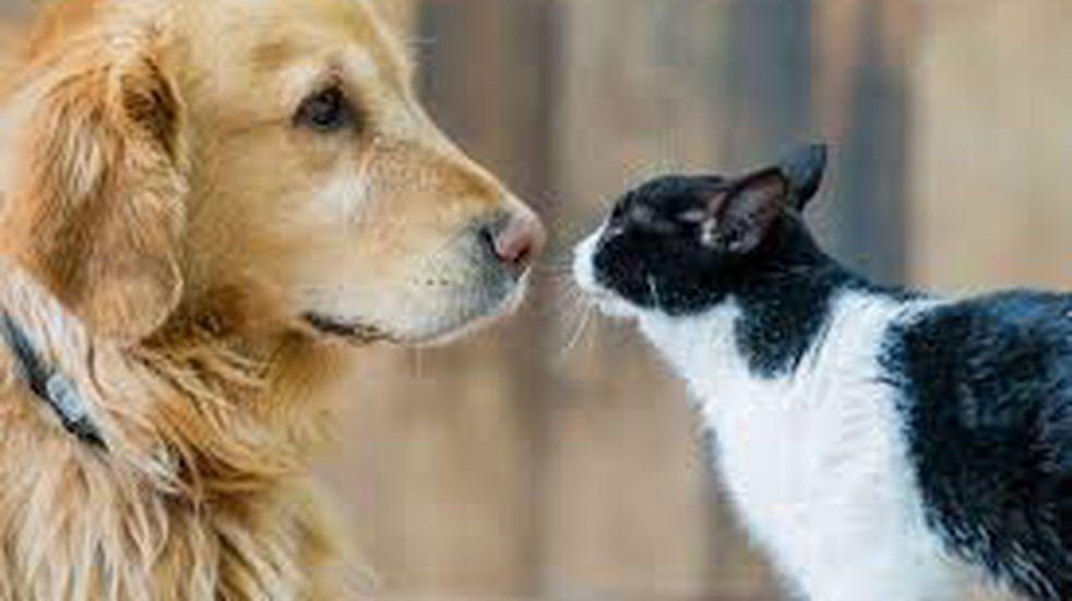 Un perro se encuentra con cuatro gatos y su reacción es viral