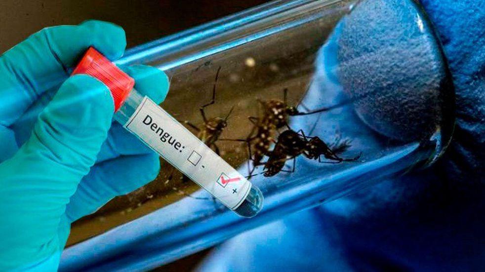 Dengue en Chaco: 10 nuevos casos