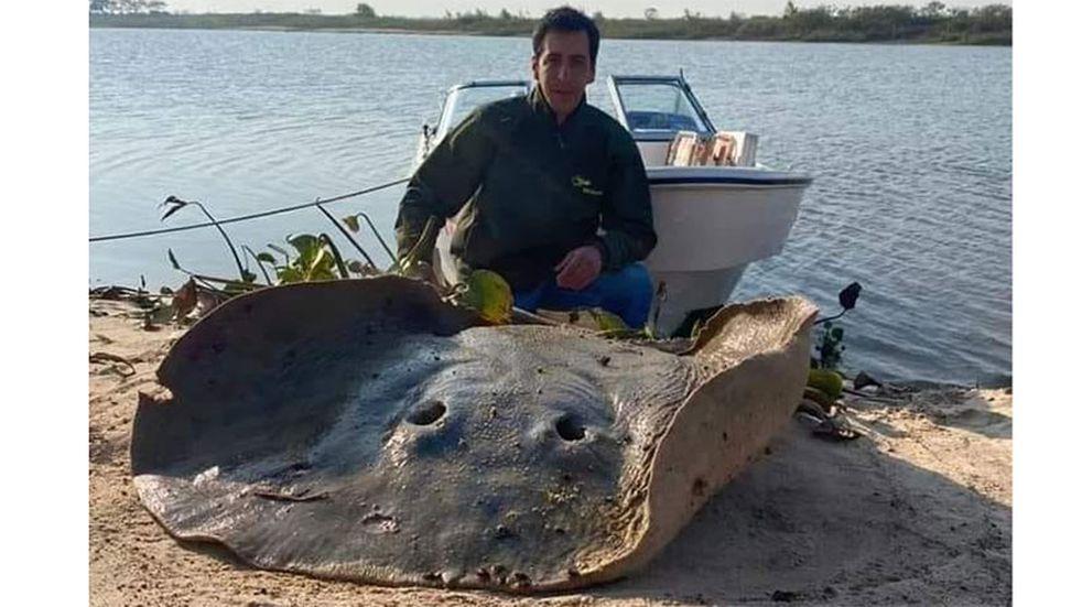 Una raya gigante de 120 kilos capturada en Esquina generó rechazo