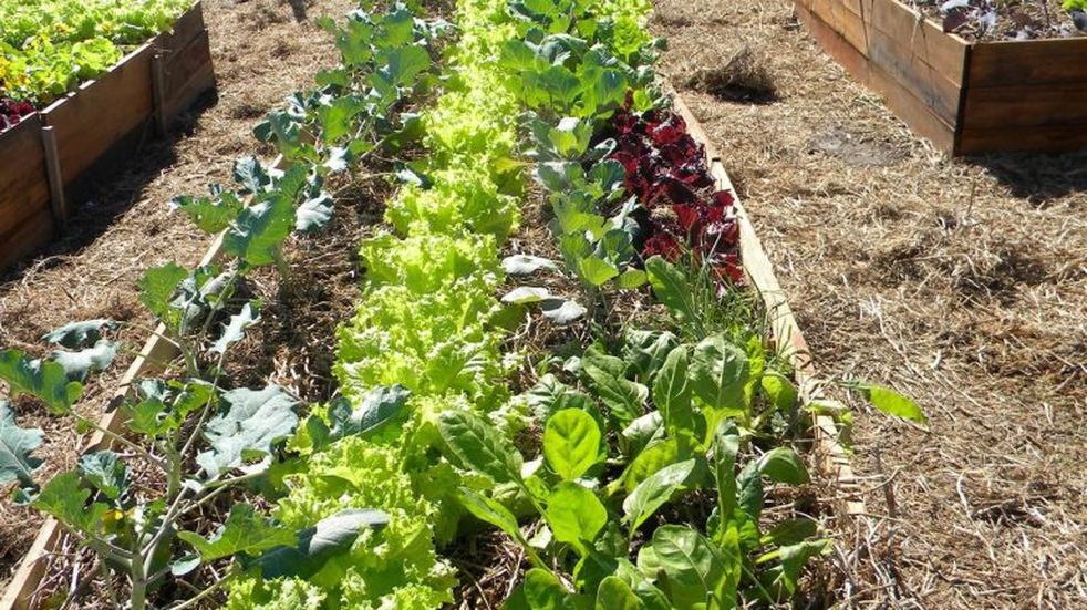 El programa Huerta en tu Hogar entrega semillas