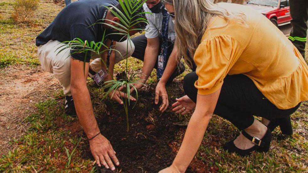 Sembraron 146 plantines de especies nativas en el Aeropuerto de Iguazú