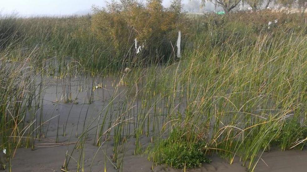Continúan los rastrillajes por la aparición de restos humanos en Punta Lara