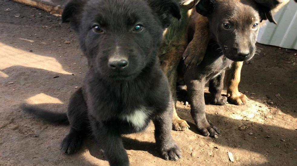 Una mujer abrió un refugio para perros: fue lo que la ayudó a salir de la violencia de género