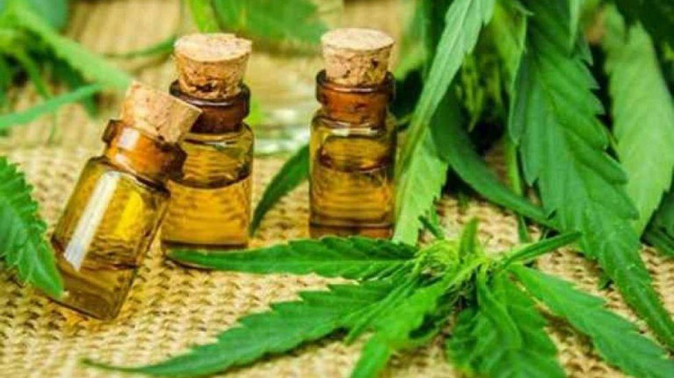 Cannabis terapéutico: Bahía avanza hacia la reglamentación