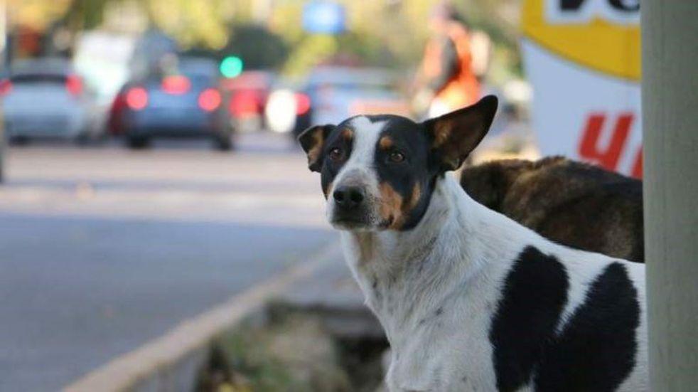 Una medida para imitar: colocan recipientes con agua para los perros de la calle