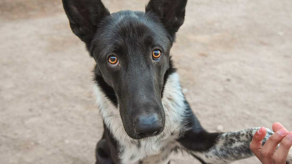 Milo, un perrito que tiene la red social de  Instagram