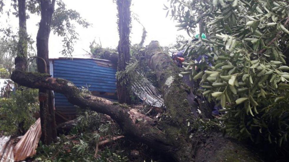 Villa Christen: caída de un árbol terminó destruyendo dos viviendas
