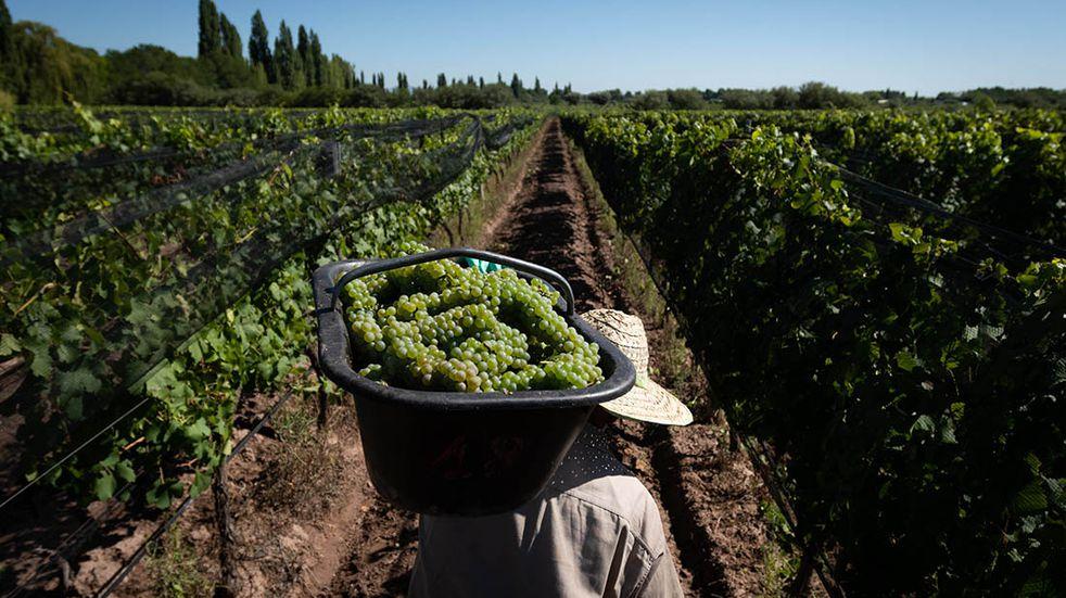 Productores del Valle de Uco denunciaron que las bodegas no respetan el precio