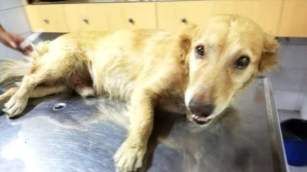La historia de Matías y Duke, el perrito rescatado casi muerto, que hoy está bien y con nuevo hogar