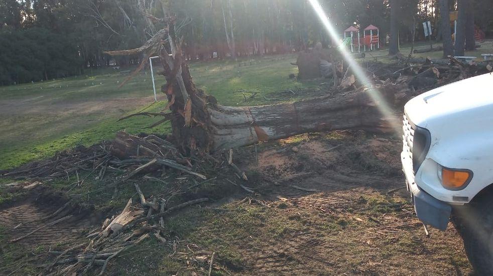 Luego de la caída de un árbol la Municipalidad trabaja en el Parque Cabañas