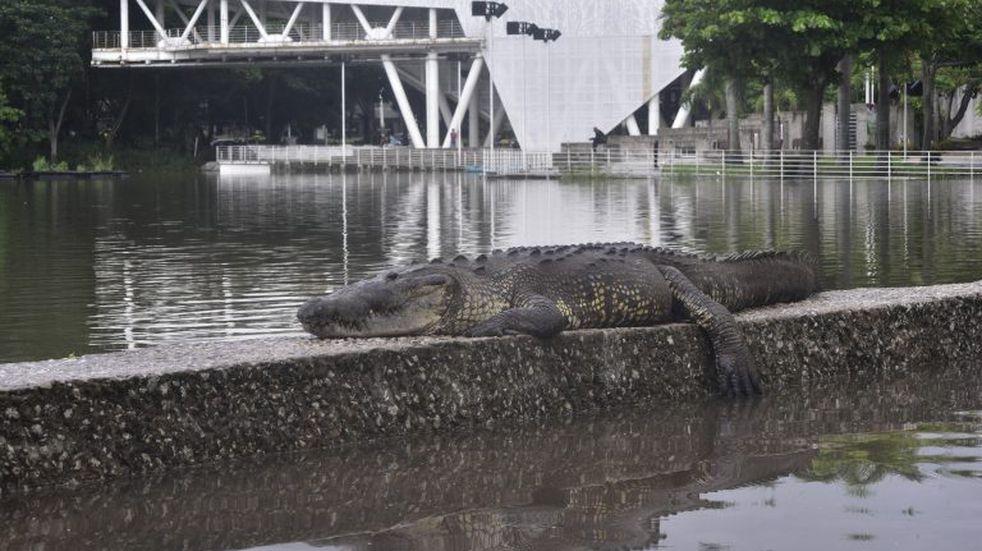 Las imágenes de las inundaciones en Tabasco