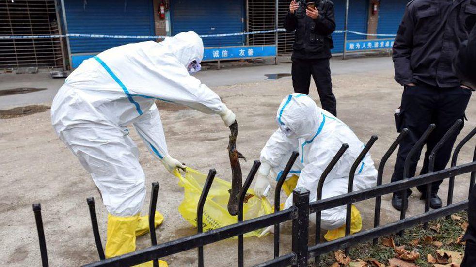 Las impactantes imágenes del mercado clandestino donde se originó el coronavirus en China
