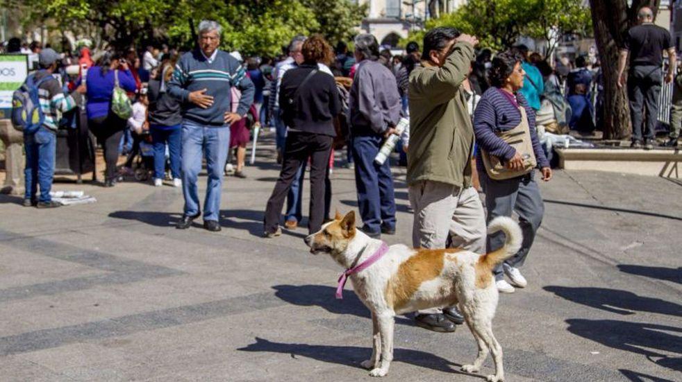 Piden identificar a los perros peregrinos con cintas