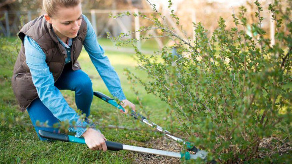 ¿Cómo mantener la humedad de las plantas con las estufas al máximo?