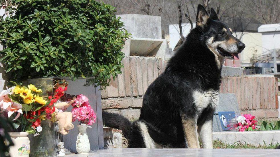 En el Día del Animal, recordamos a Capitán, el can que se convirtió en una leyenda de Carlos Paz
