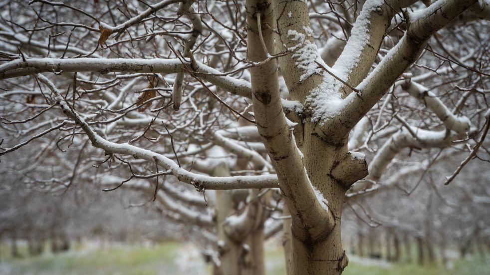 Clima en Tandil: podría nevar en la ciudad durante la madrugada
