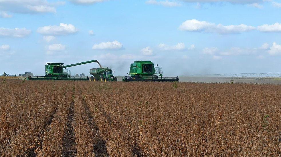 El procesamiento de soja alcanzó en el primer semestre su nivel más alto en cinco años