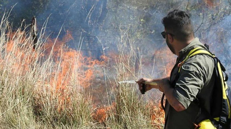Incendios forestales afectaron a 500 mil hectáreas.