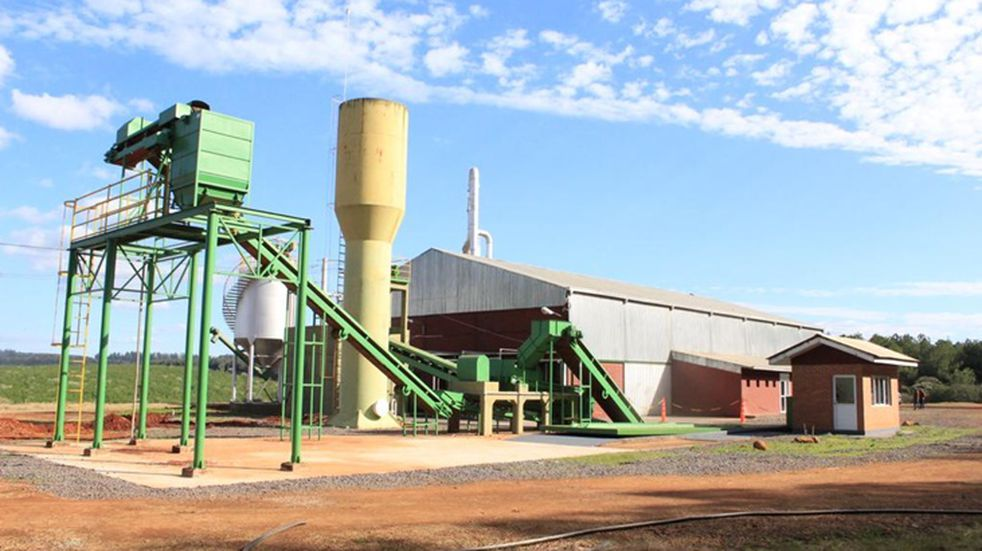 Continúa avanzando la producción de fécula de mandioca en la planta de Puerto Esperanza