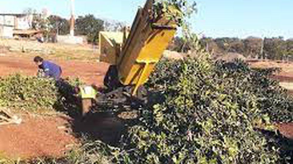 Entregaron a productores agroecológicos ramas chipiadas de las localidades de General Alvear y Colonia Guaraní