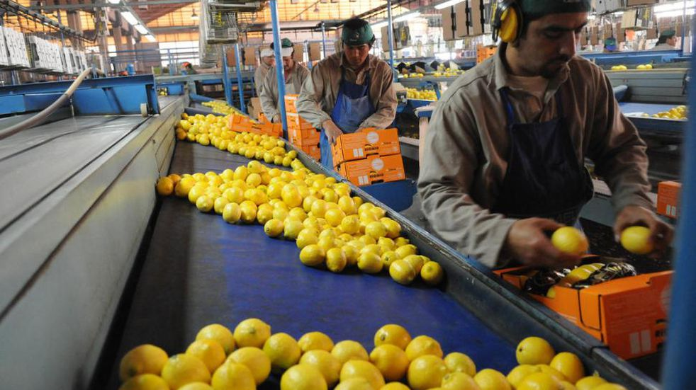 El primer envío de limones argentinos a la UE tras la reapertura de este mercado