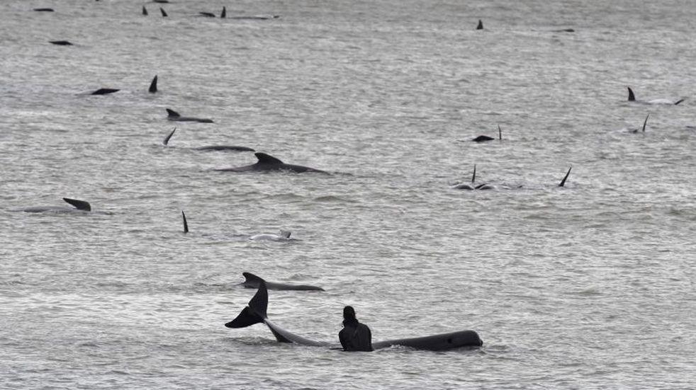 En Las Grutas, un kayakista estuvo cara a cara con tres ballenas
