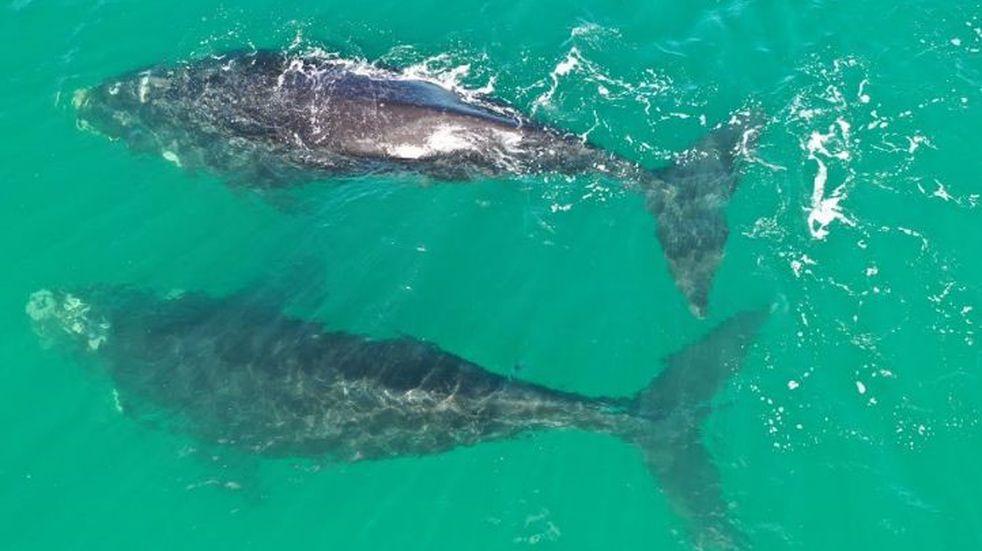 Un fotógrafo de Las Grutas aprovechó la cuarentena para tomar fotos a delfines y ballenas