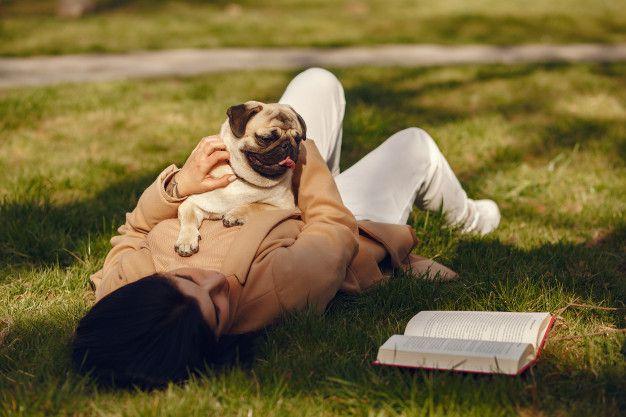 Los pugs suelen ser calmados y tranquilos, pero requieren de muchos cuidados especiales. Foto/Freepik