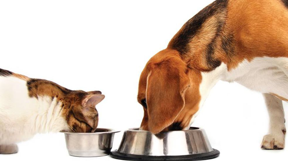 Los alimentos más tóxicos para tu mascota