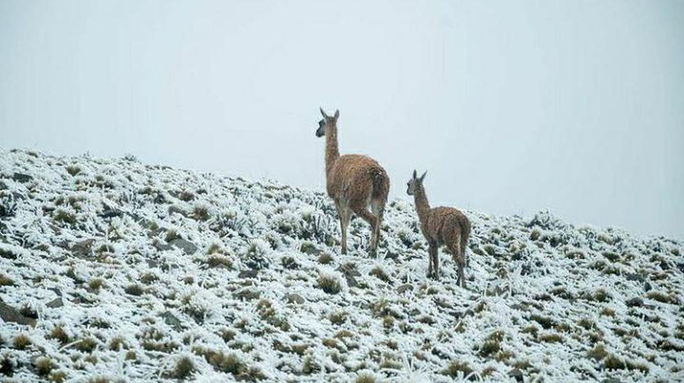 Postales de la primera nevada en Villavicencio