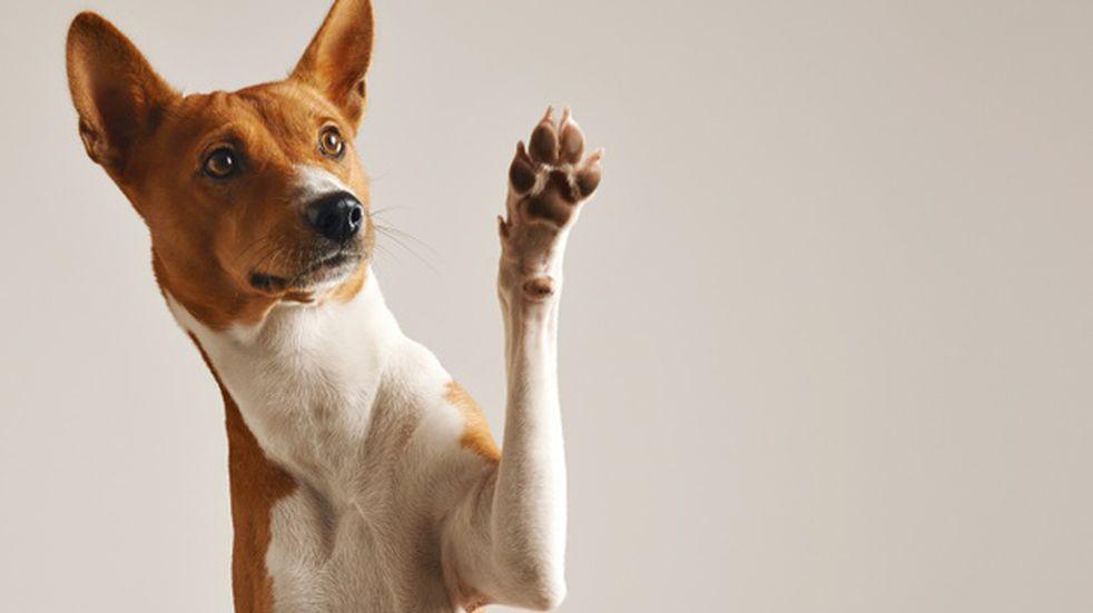 Un perro grabó su propio video para Tik Tok y ya es todo un influencer