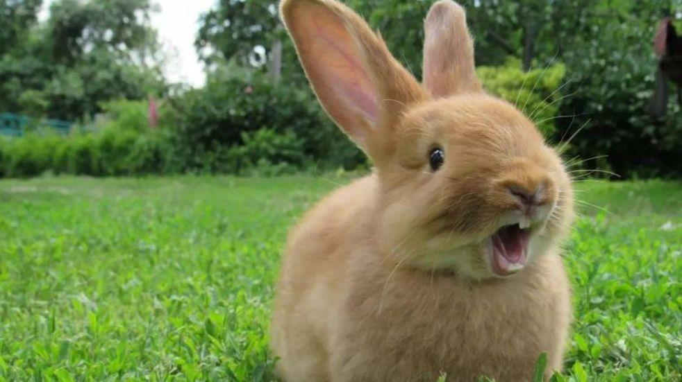 Un desafío visual solo para entendidos: hay que encontrar un conejo oculto en la imagen