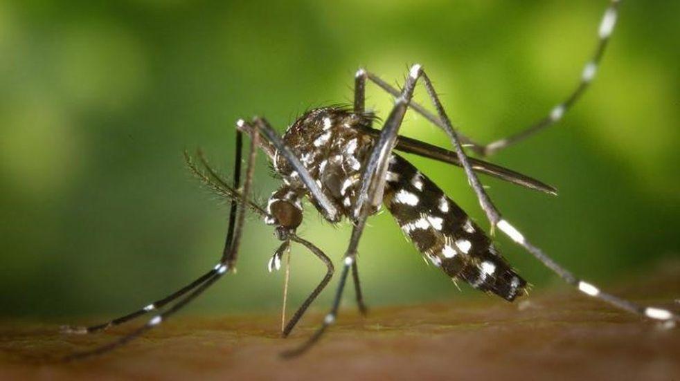 Mil casos confirmados de dengue en Salvador Mazza este año