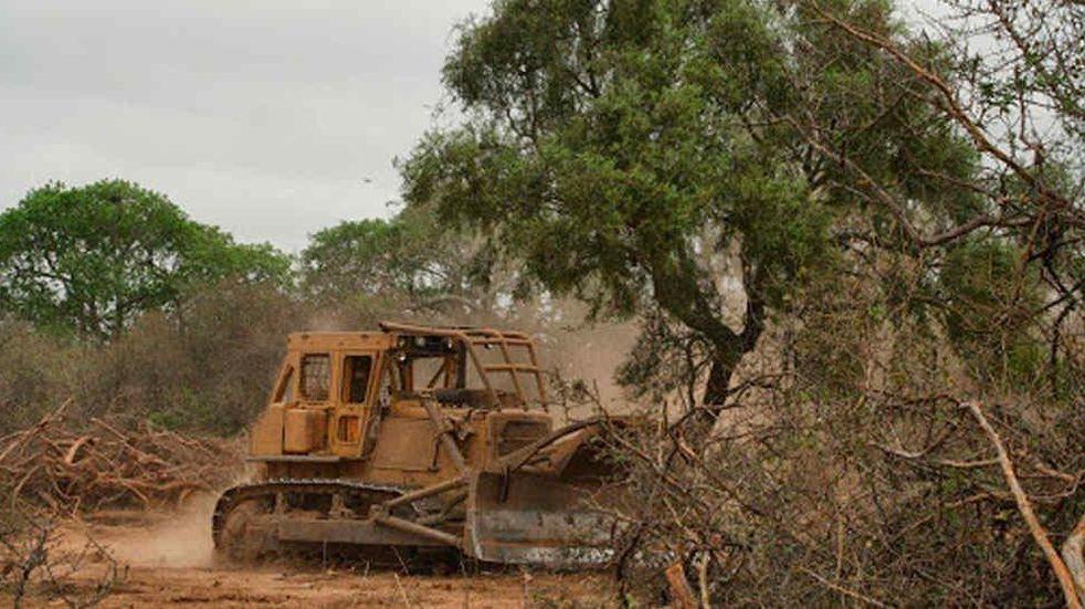Greenpeace denunció la deforestación en Chaco ante la Corte Suprema