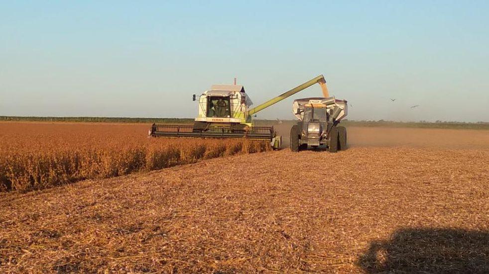 El empleo y las cadenas agroindustriales