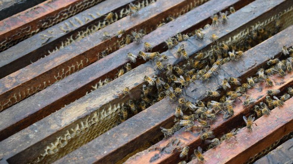 Destinan más de 900 mil pesos para aumentar la producción apícola en el noroeste de Córdoba