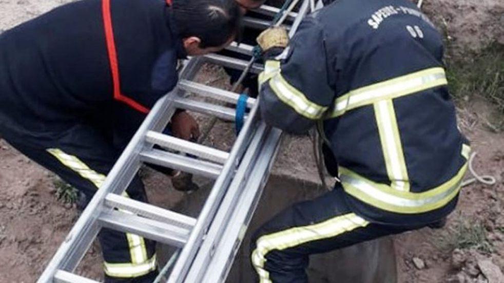 Video: bomberos de Luján rescataron a un perrito que cayó a un pozo