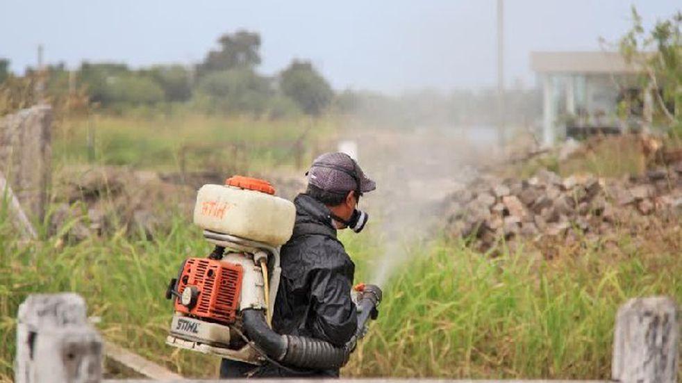 El abecé de los insecticidas naturales