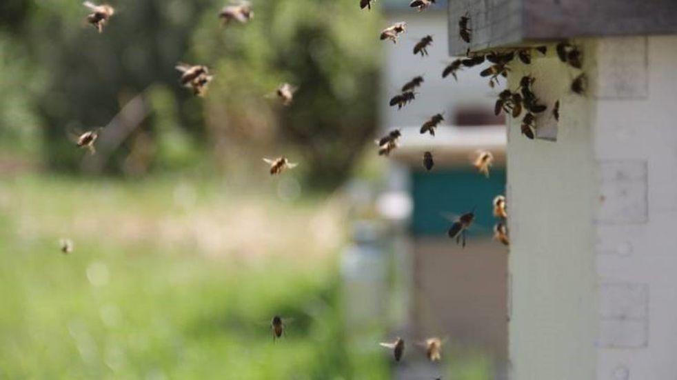 Ingresaron a un balneario sin habilitación y fueron atacados por abejas
