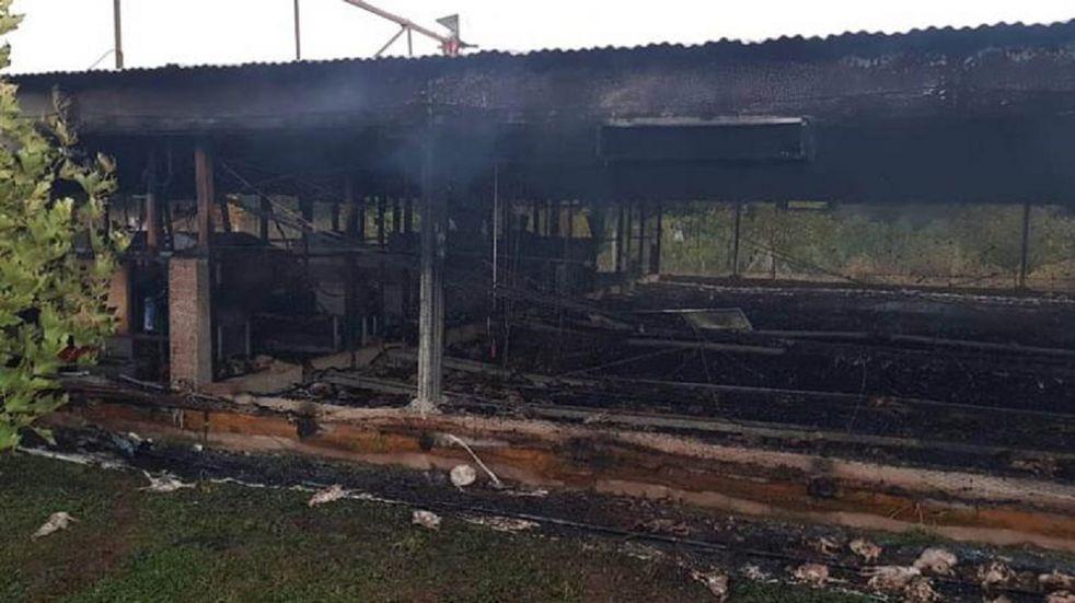 Córdoba: más de 10.000 pollos mueren en incendio de un criadero