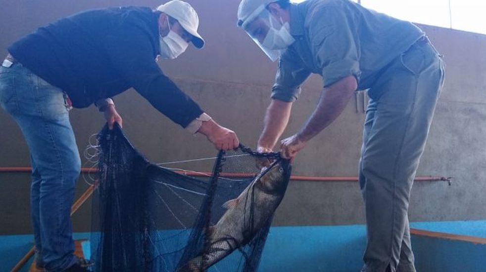 La primera cosecha de peces fue de 700 kilos en esta Semana Santa