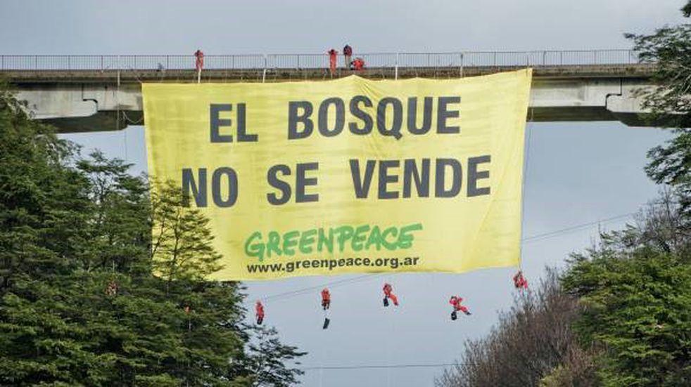 Fuerte rechazo de organizaciones ambientalistas a la nueva ley de Bosques en Neuquén