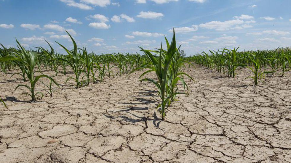 La sequía afecta la distribución de las plantas y el rendimiento de los cultivos