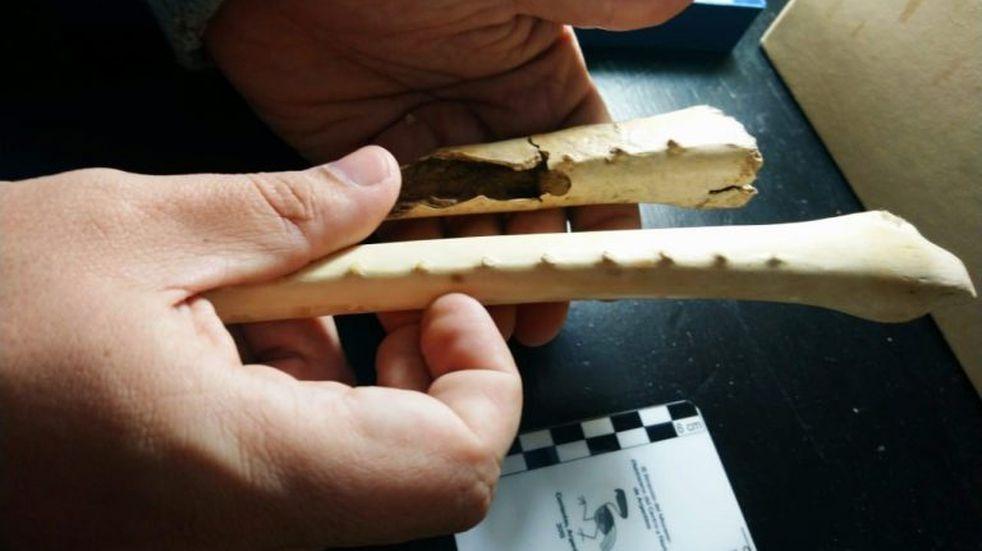 Descubren los restos de un cóndor gigante prehistórico