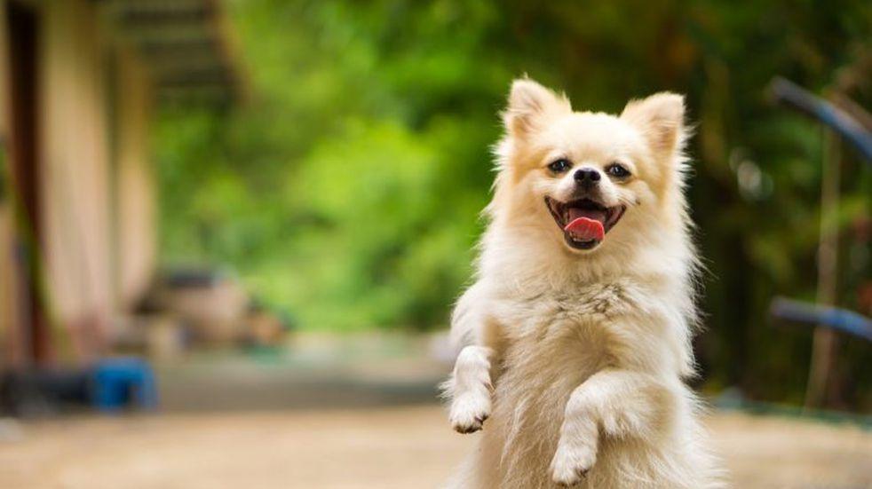 ¿Por qué tu perro se vuelve loco cuando llegás a casa?