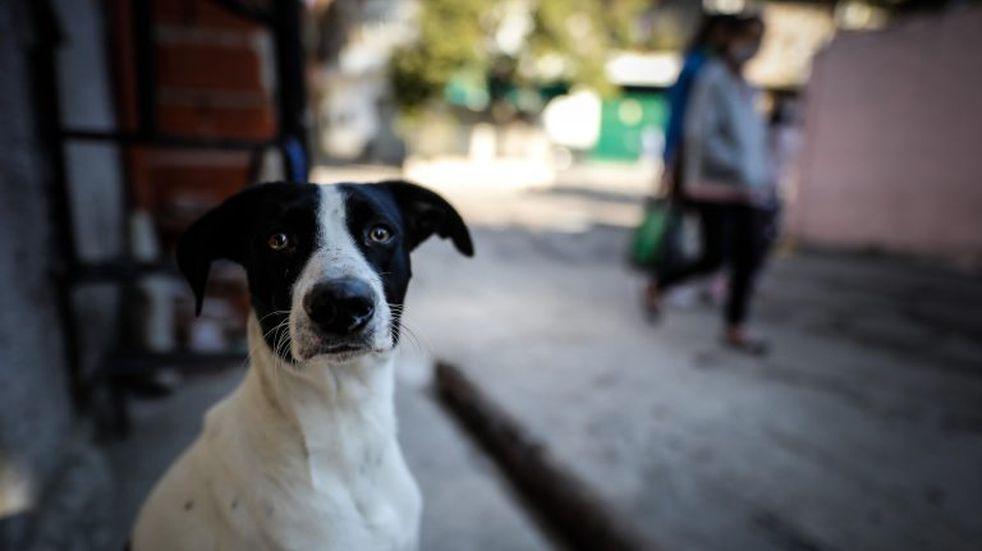 Estudiantes de veterinaria piden ayuda para hacer refugios sustentables a los perros de la calle
