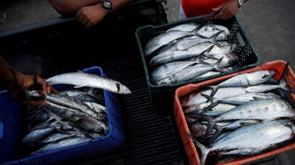 Expectativa positiva en el sector pesquero de Chubut por el tratado Mercosur-UE