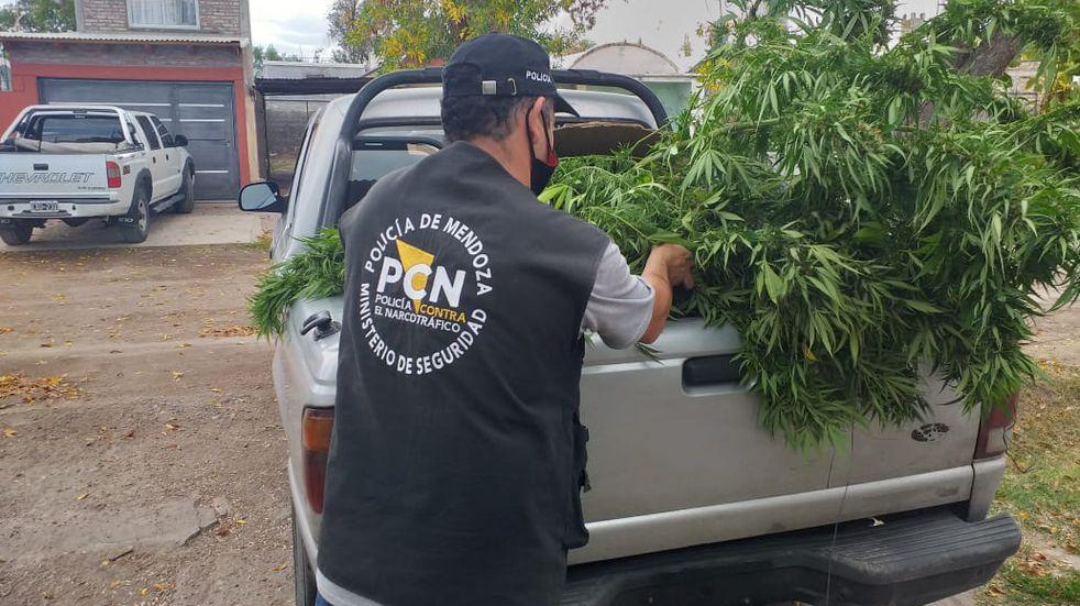 Tres detenidos entre Alvear y Malargüe con plantas y de marihuana, semillas y porros