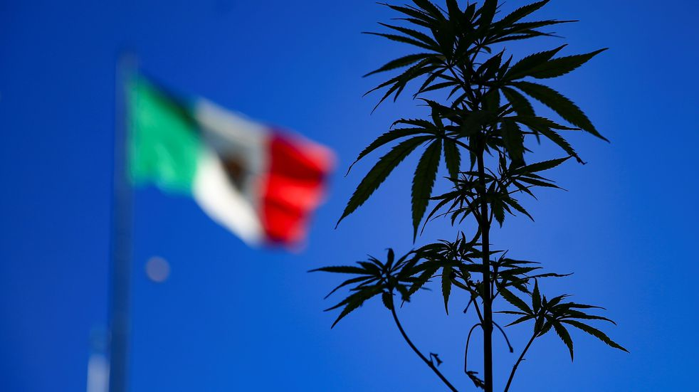 Se aprobó en México el consumo recreativo de marihuana